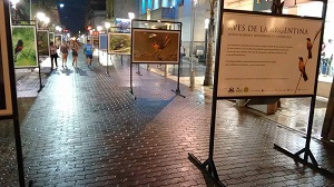 En la Plaza Mansilla se expone una muestra fotográfica de aves argentinas
