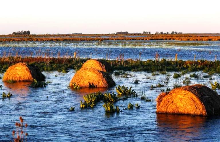 Con inundaciones y dólar bajo, el campo retendrá sus granos y complicaría la economía